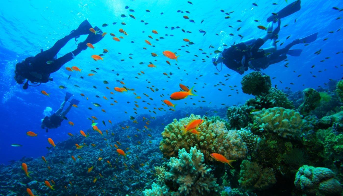 Scuba diving in corfu, Dominoes ipsos dassia activities in corfu, must do in corfu provided by dominoes hotel.